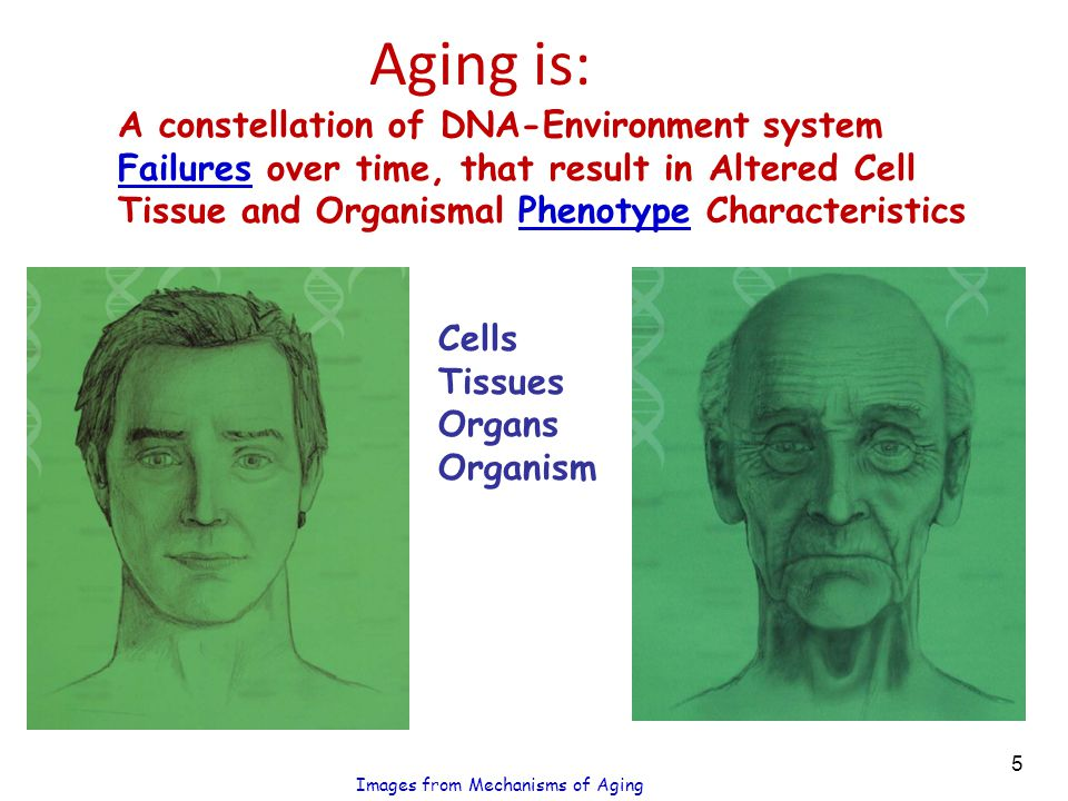 Aging is: A constellation of DNA-Environment system Failures over time, that result in Altered Cell Tissue and Organismal Phenotype Characteristics Cells Tissues Organs Organism Images from Mechanisms of Aging 5