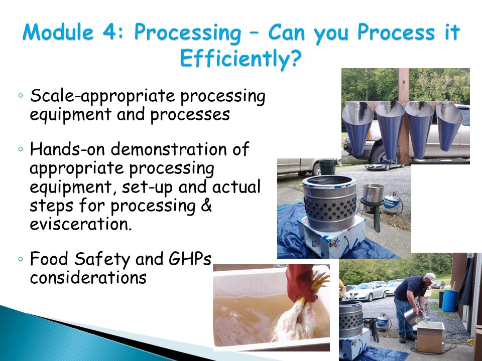 ◦ Scale-appropriate processing equipment and processes ◦ Hands-on demonstration of appropriate processing equipment, set-up and actual steps for processing & evisceration.