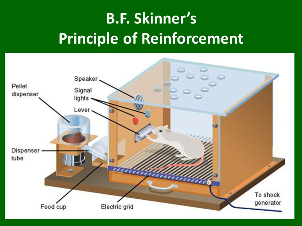 B.F. Skinner's Principle of Reinforcement