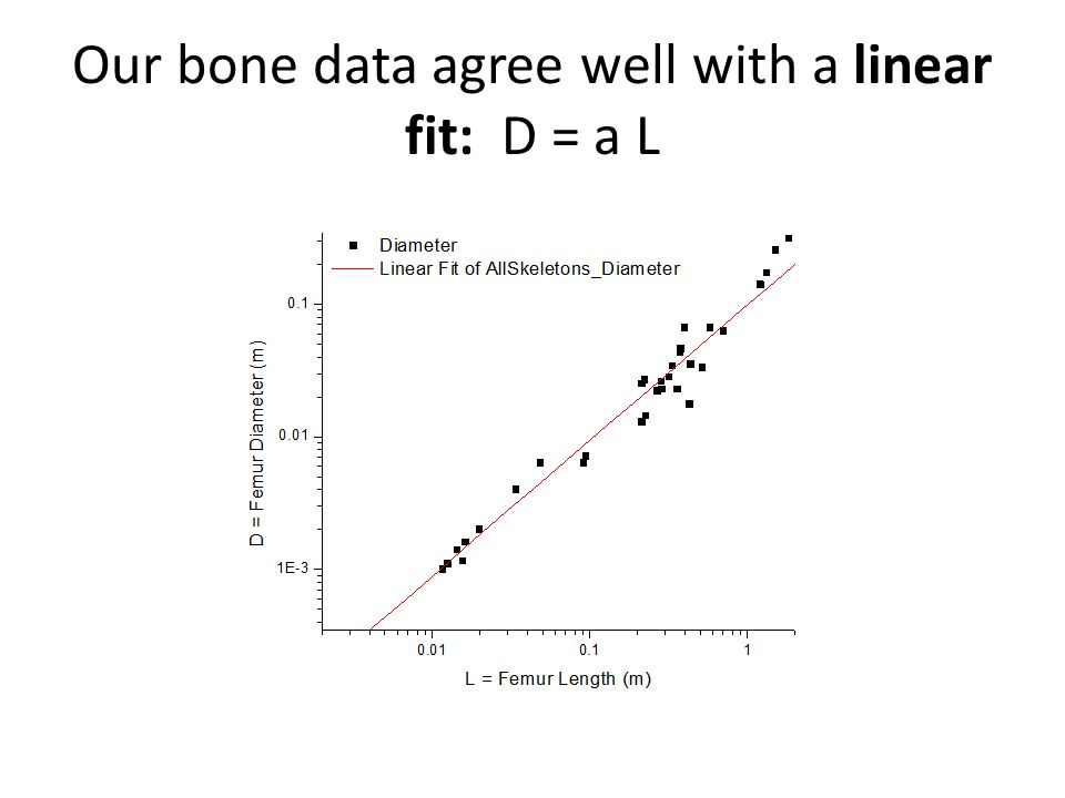Our bone data agree well with a linear fit: D = a L