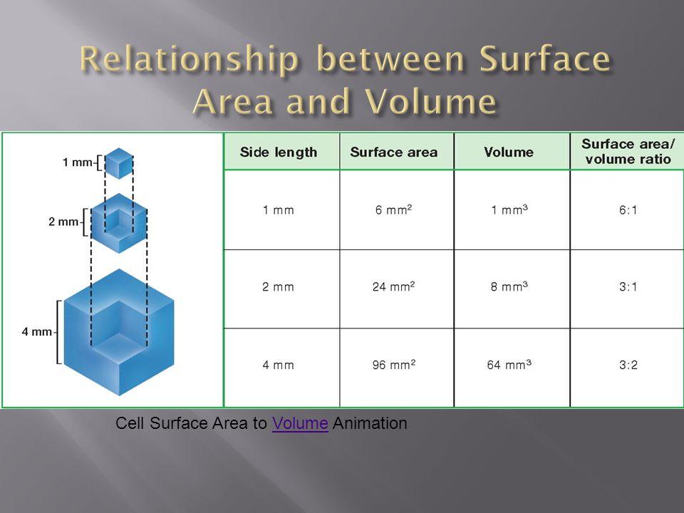Cell Surface Area to Volume AnimationVolume