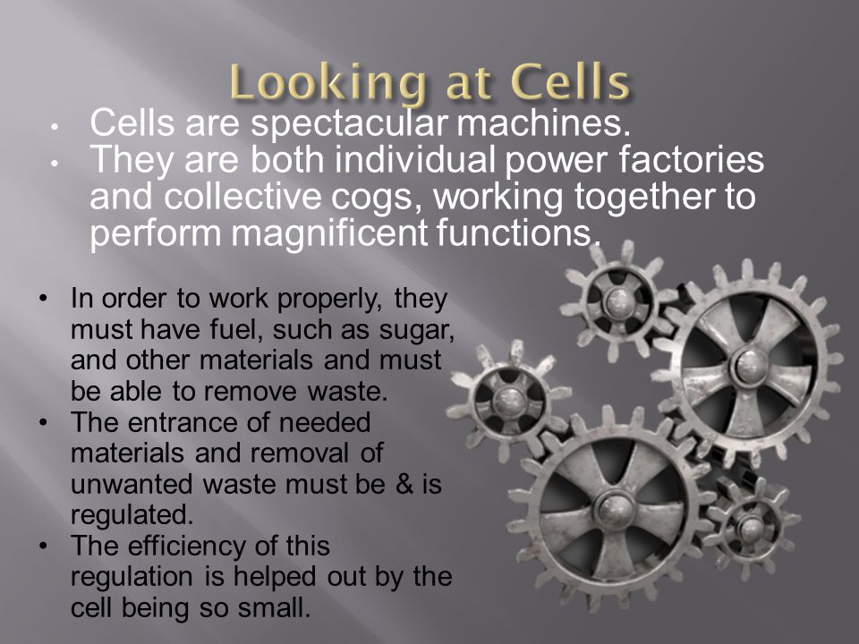Cells are spectacular machines. They are both individual power factories and collective cogs, working together to perform magnificent functions. In or
