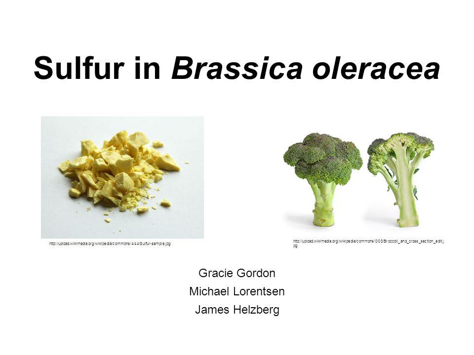 SULTR Genes (A. thaliana)