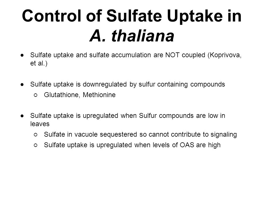 Control of Sulfate Uptake in A. thaliana ● Sulfate uptake and sulfate accumulation are NOT coupled (Koprivova, et al.) ● Sulfate uptake is downregulat