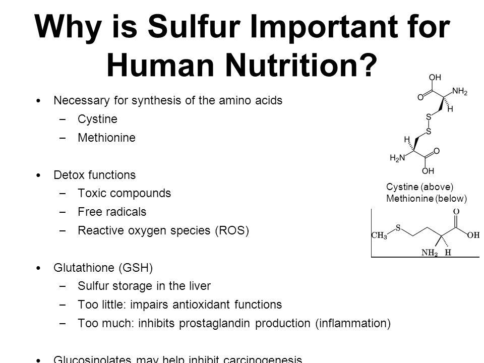 SO 4 2- in Soil H + /SO 4 2- co- transporter SULTR1;_ Genes (12) SO 4 2- in root cells SULTR2;_ Transporters distribute SO 4 2- (Also SULTR1;3) SO 4 2- in stem/leaves/etc.