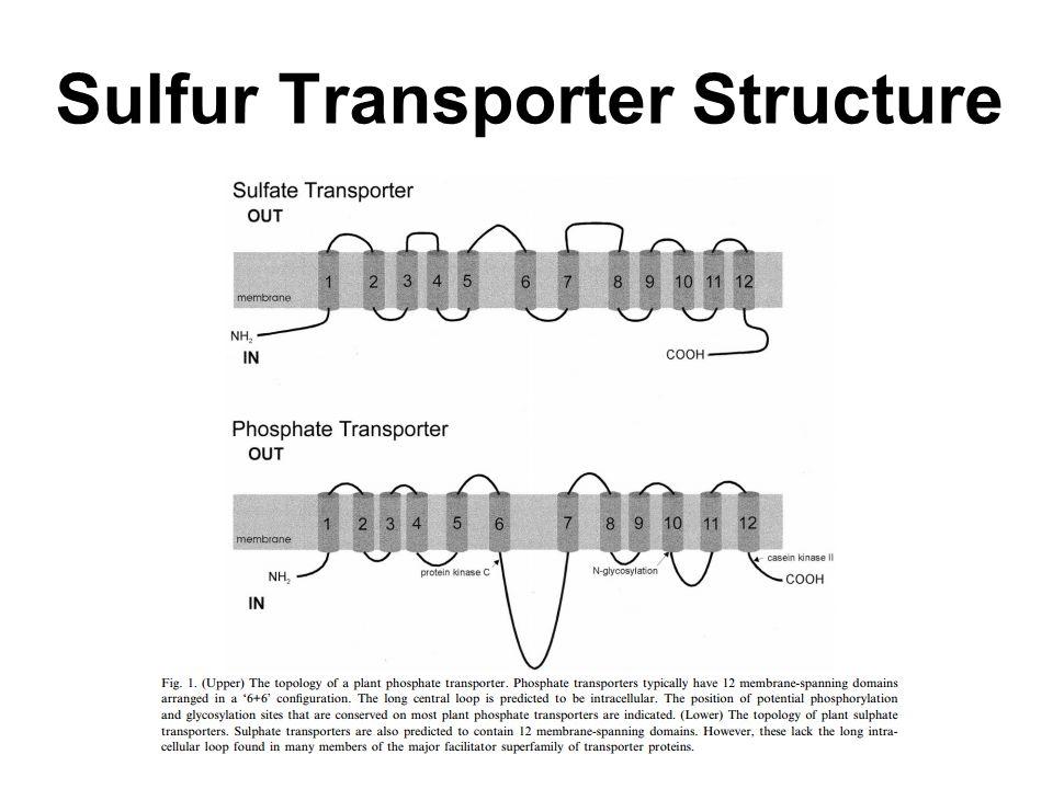 Sulfur Transporter Structure