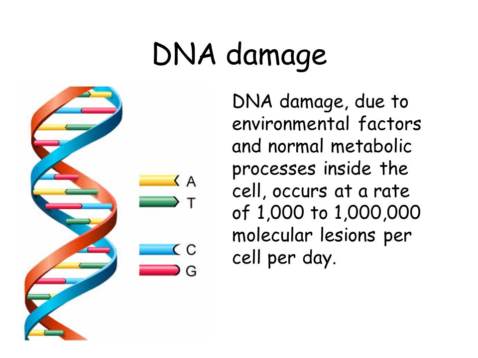 Cancer Chemotherapy The hallmark of all cancers is continuous cell division.