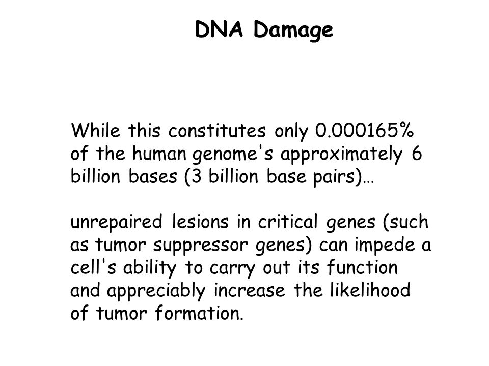 Failure to repair DNA lesions may result in blockages of transcription and replication, mutagenesis, and/or cellular cytotoxicity.