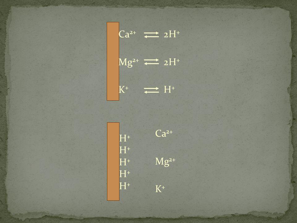 Ca 2+ Mg 2+ K + 2H + H + H+H+H+H+H+H+H+H+H+H+ Ca 2+ Mg 2+ K +