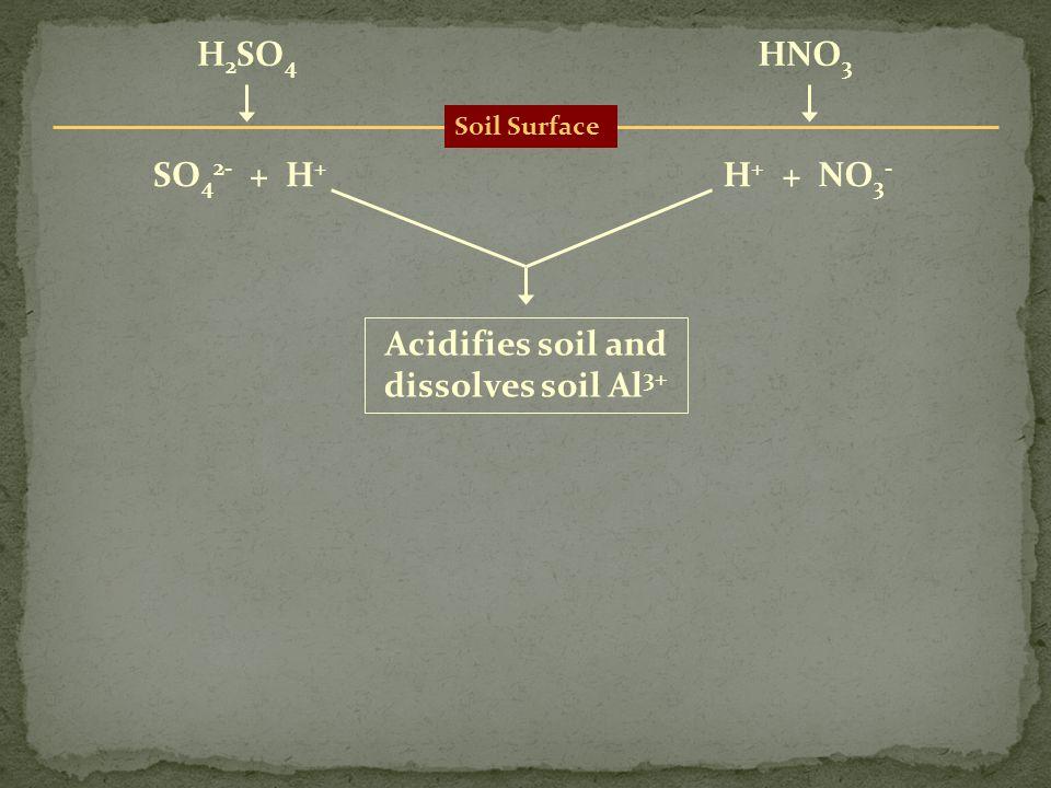 Soil Surface H 2 SO 4 HNO 3 SO 4 2- + H + H + + NO 3 - Acidifies soil and dissolves soil Al 3+