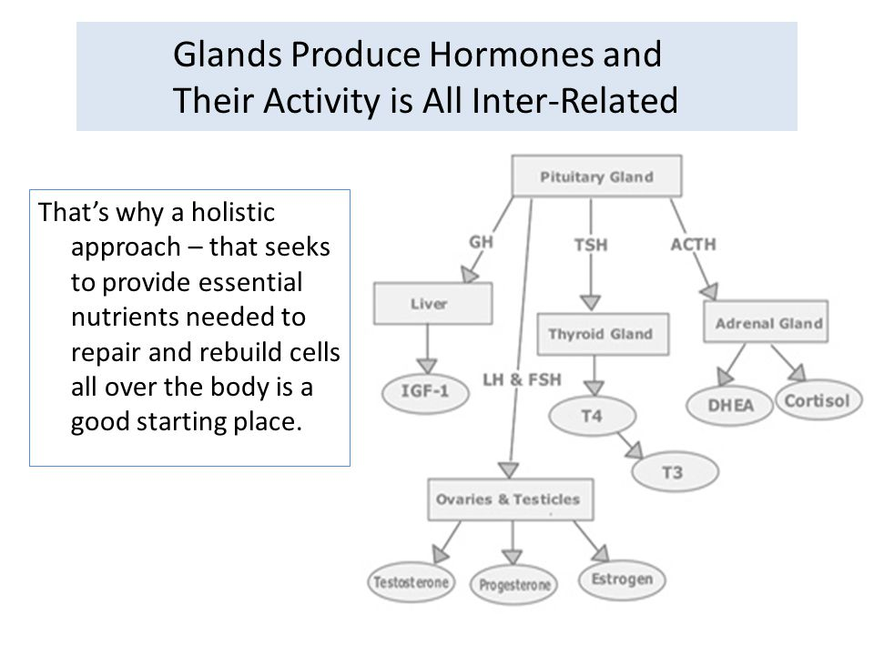 Glands Produce Hormones and Their Activity is All Inter-Related That's why a holistic approach – that seeks to provide essential nutrients needed to r