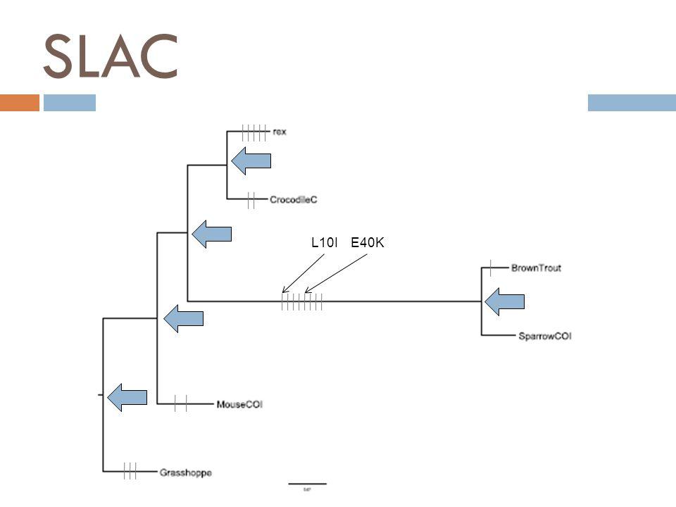 SLAC E40KL10I