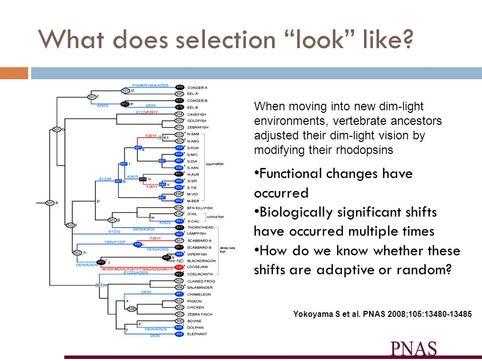 Neutral Selection Mutations will occur evenly throughout the genome.