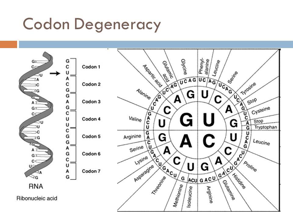 Codon Degeneracy