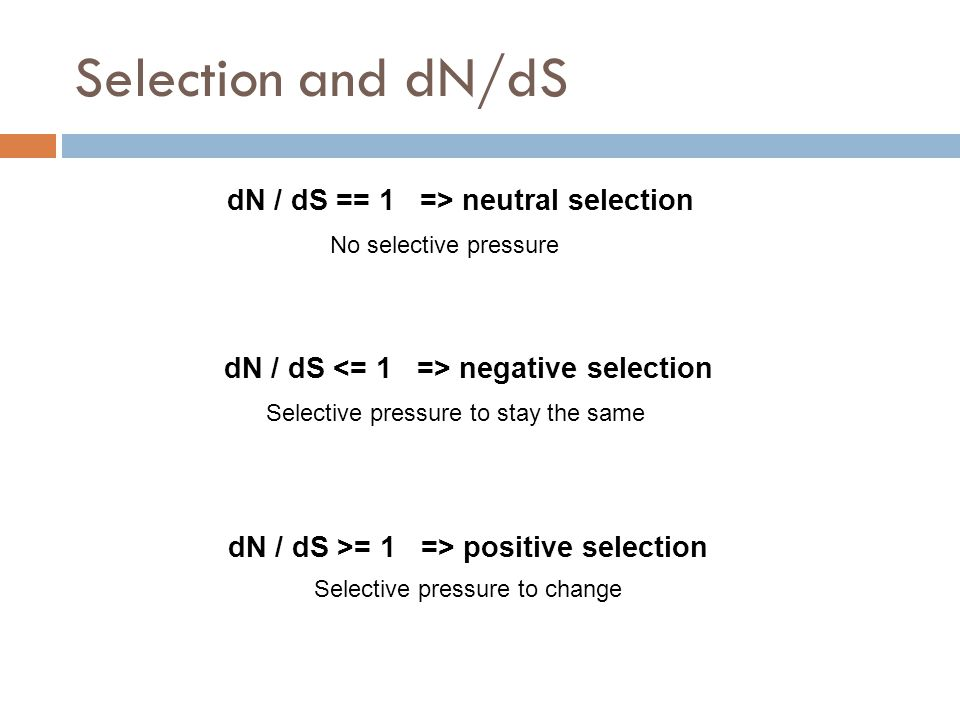 Selection and dN/dS dN / dS == 1 => neutral selection dN / dS negative selection dN / dS >= 1 => positive selection No selective pressure Selective pressure to stay the same Selective pressure to change
