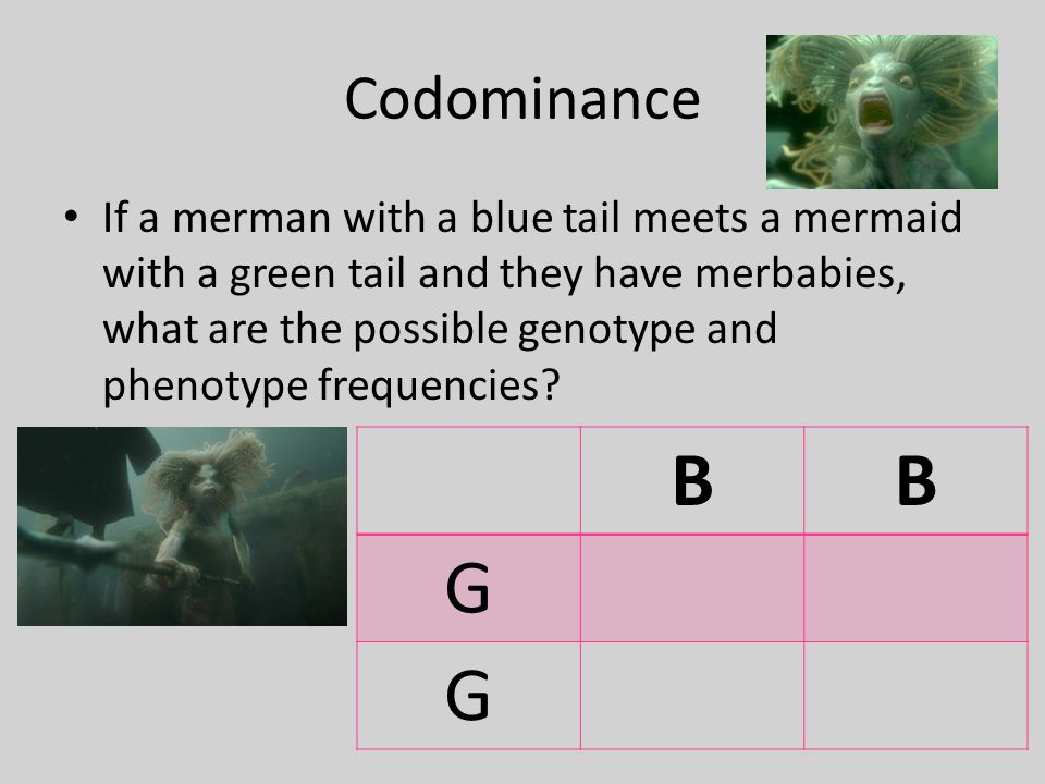 Codominance If a merman with a blue tail meets a mermaid with a green tail and they have merbabies, what are the possible genotype and phenotype frequencies.