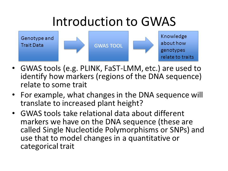Introduction to GWAS GWAS tools (e.g. PLINK, FaST-LMM, etc.) are used to identify how markers (regions of the DNA sequence) relate to some trait For e