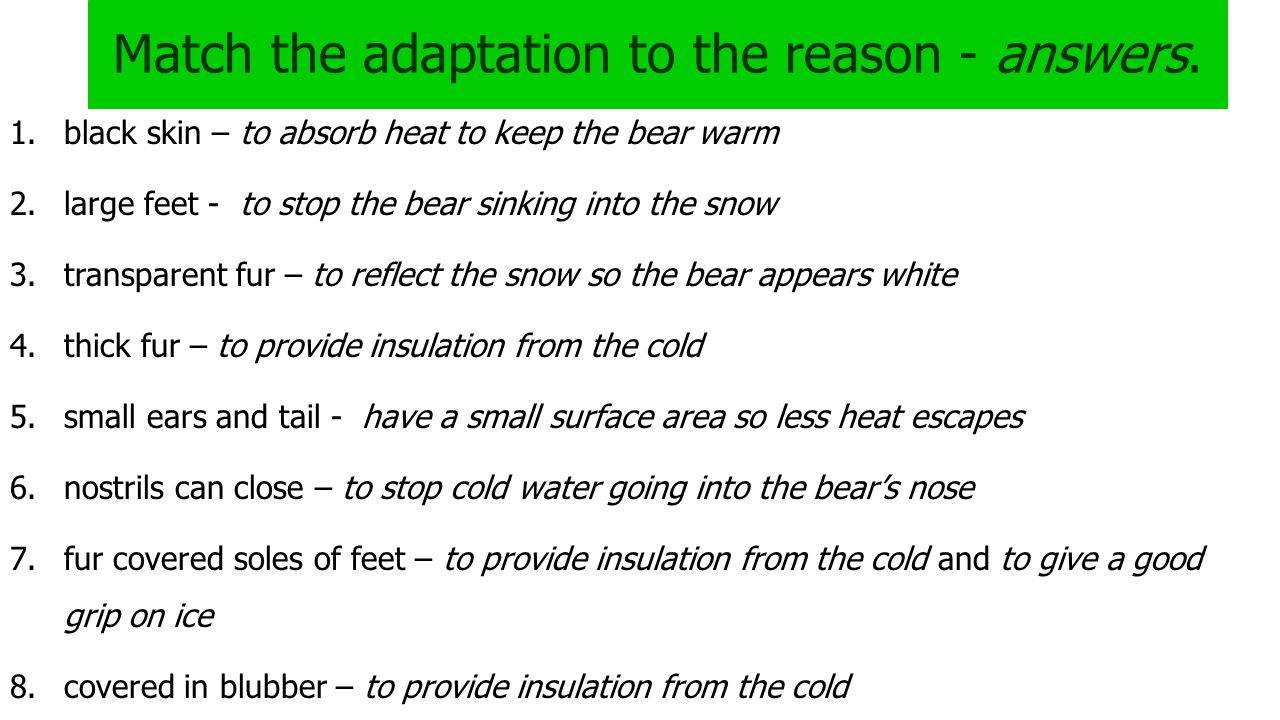 Match the adaptation to the reason - answers. 1.black skin – to absorb heat to keep the bear warm 2.large feet - to stop the bear sinking into the sno