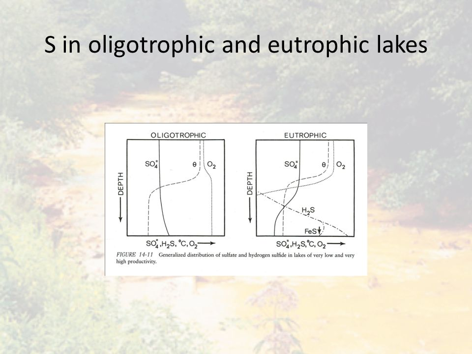 S in oligotrophic and eutrophic lakes
