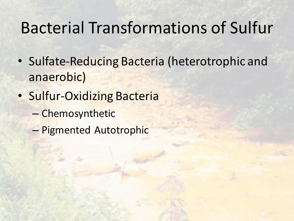 Bacterial Transformations of Sulfur Sulfate-Reducing Bacteria (heterotrophic and anaerobic) Sulfur-Oxidizing Bacteria – Chemosynthetic – Pigmented Autotrophic