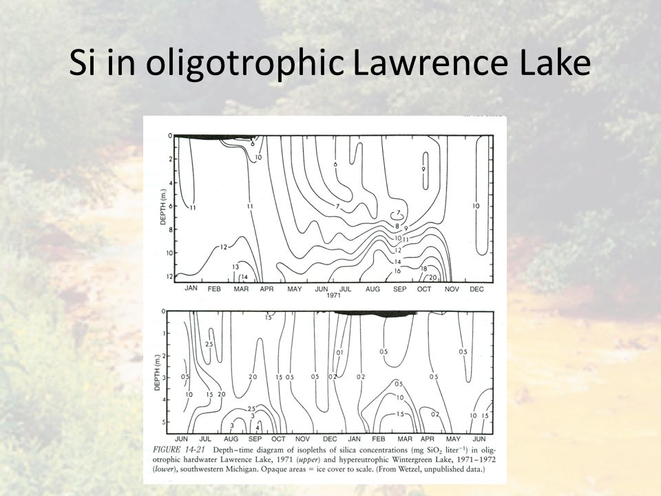 Si in oligotrophic Lawrence Lake