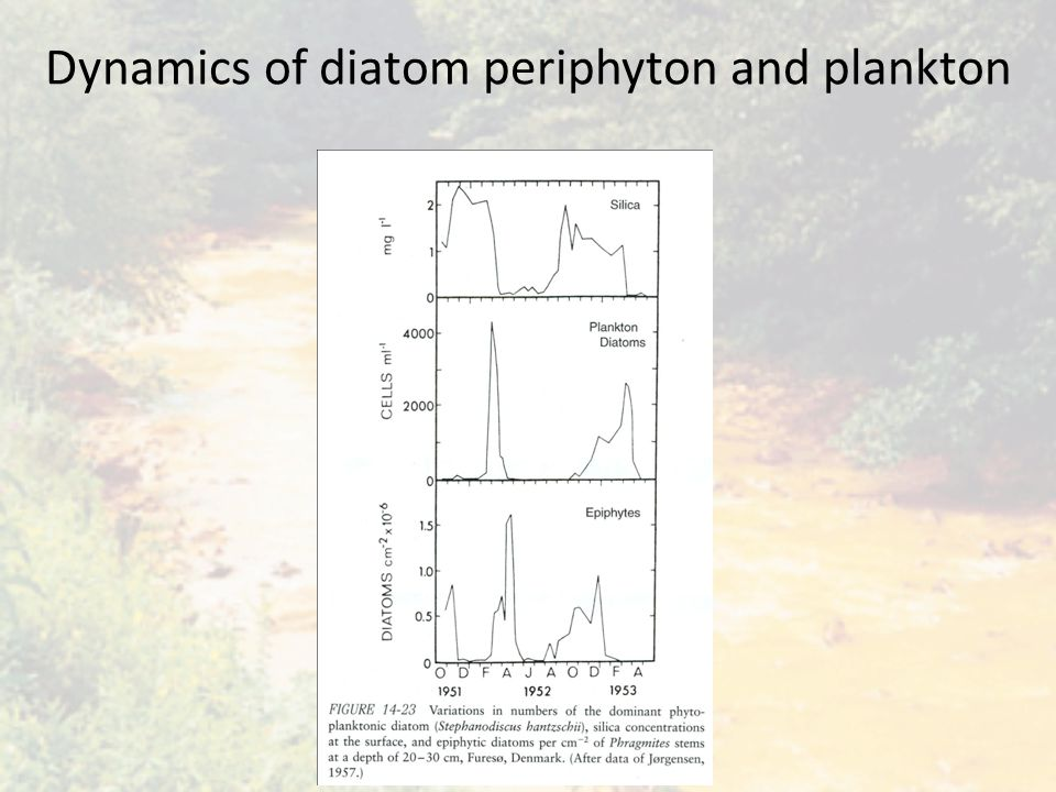 Dynamics of diatom periphyton and plankton