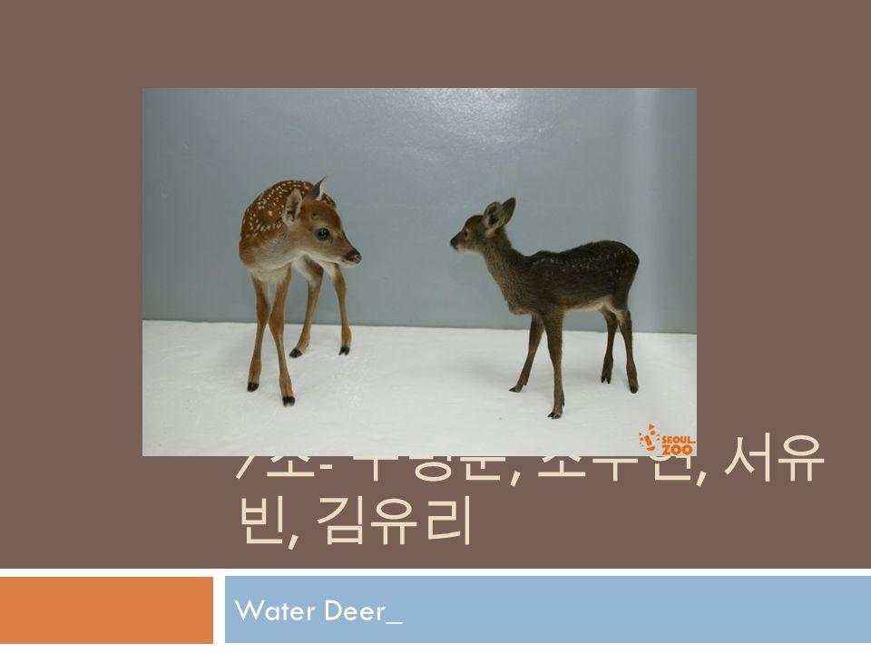 7 조 - 구명준, 조수현, 서유 빈, 김유리 Water Deer_
