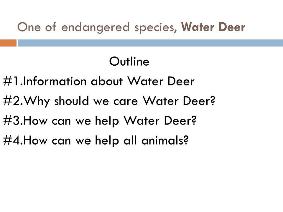 One of endangered species, Water Deer Outline #1.Information about Water Deer #2.Why should we care Water Deer.