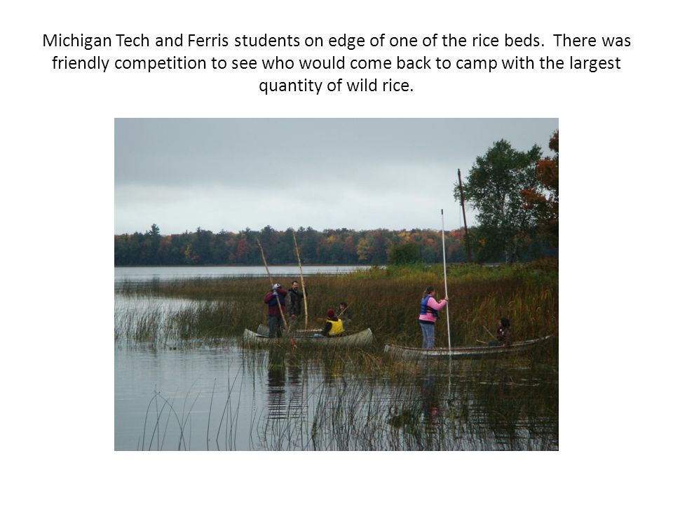 Michigan Tech and Ferris students on edge of one of the rice beds.
