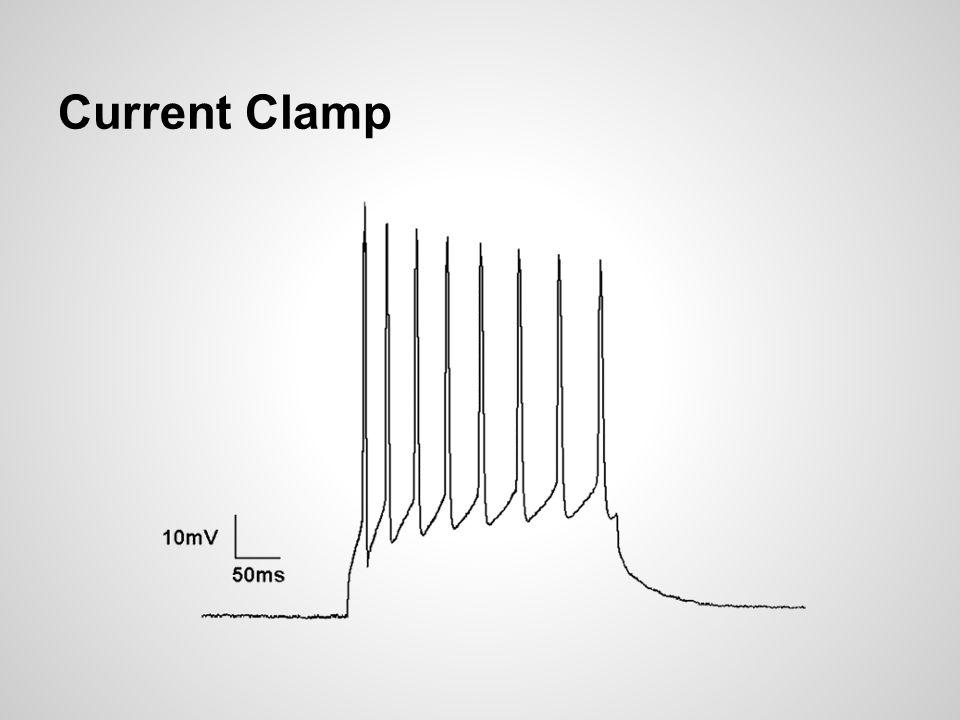 Current Clamp