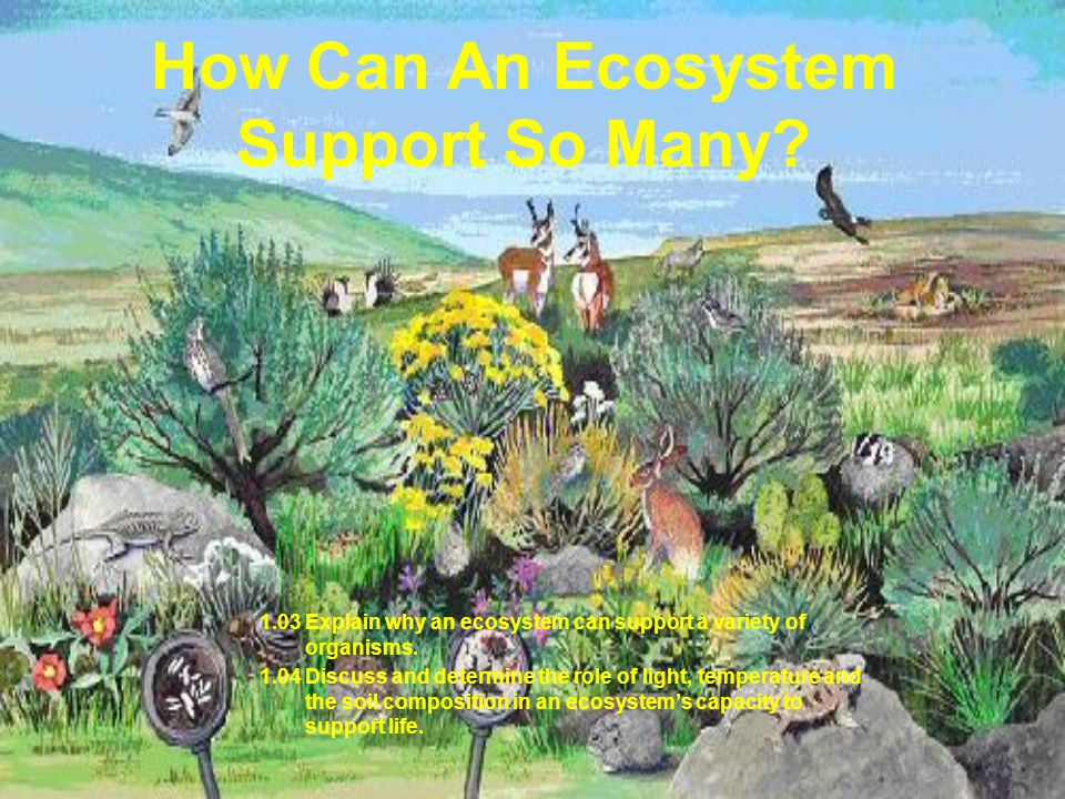 How Can An Ecosystem Support So Many.