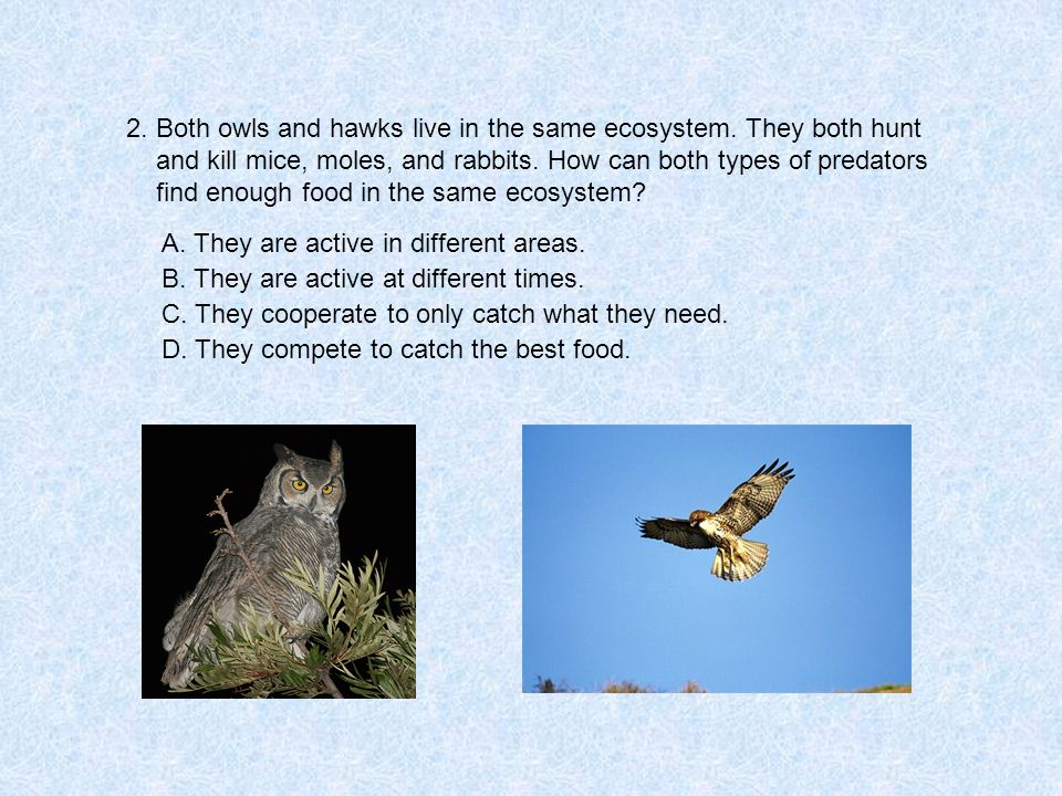2. Both owls and hawks live in the same ecosystem.