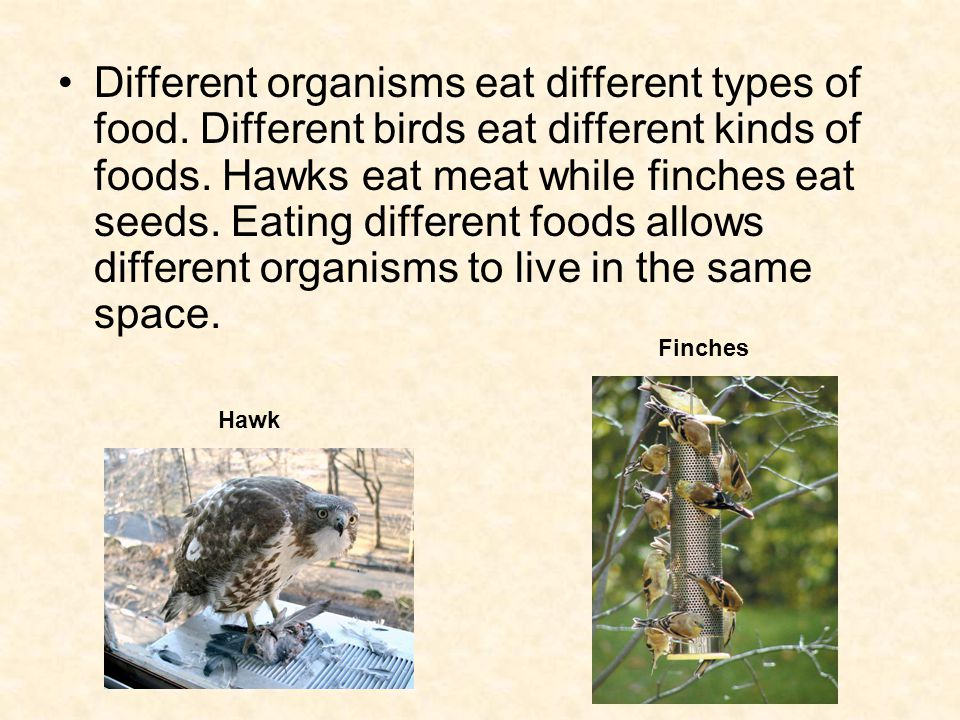 Different organisms eat different types of food. Different birds eat different kinds of foods.