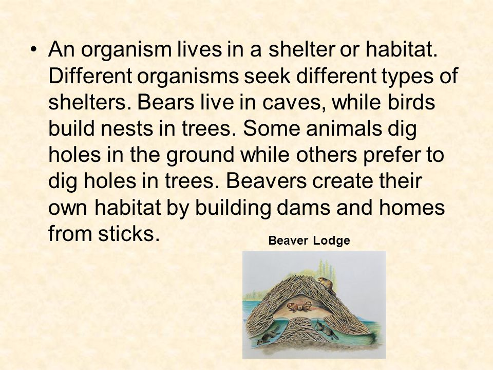 An organism lives in a shelter or habitat. Different organisms seek different types of shelters.