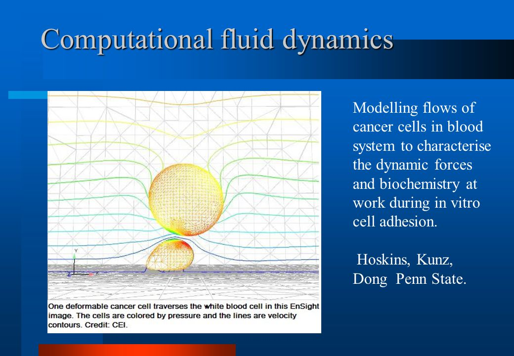 Computational fluid dynamics Modelling flows of cancer cells in blood system to characterise the dynamic forces and biochemistry at work during in vitro cell adhesion.