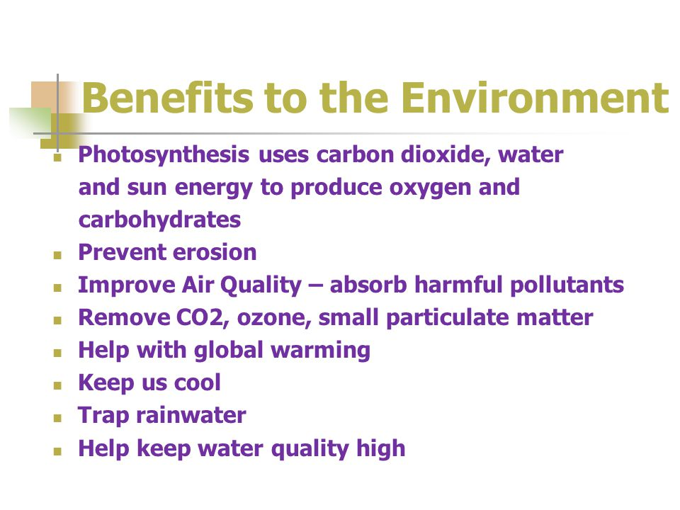 Benefits to the Environment Photosynthesis uses carbon dioxide, water and sun energy to produce oxygen and carbohydrates Prevent erosion Improve Air Quality – absorb harmful pollutants Remove CO2, ozone, small particulate matter Help with global warming Keep us cool Trap rainwater Help keep water quality high