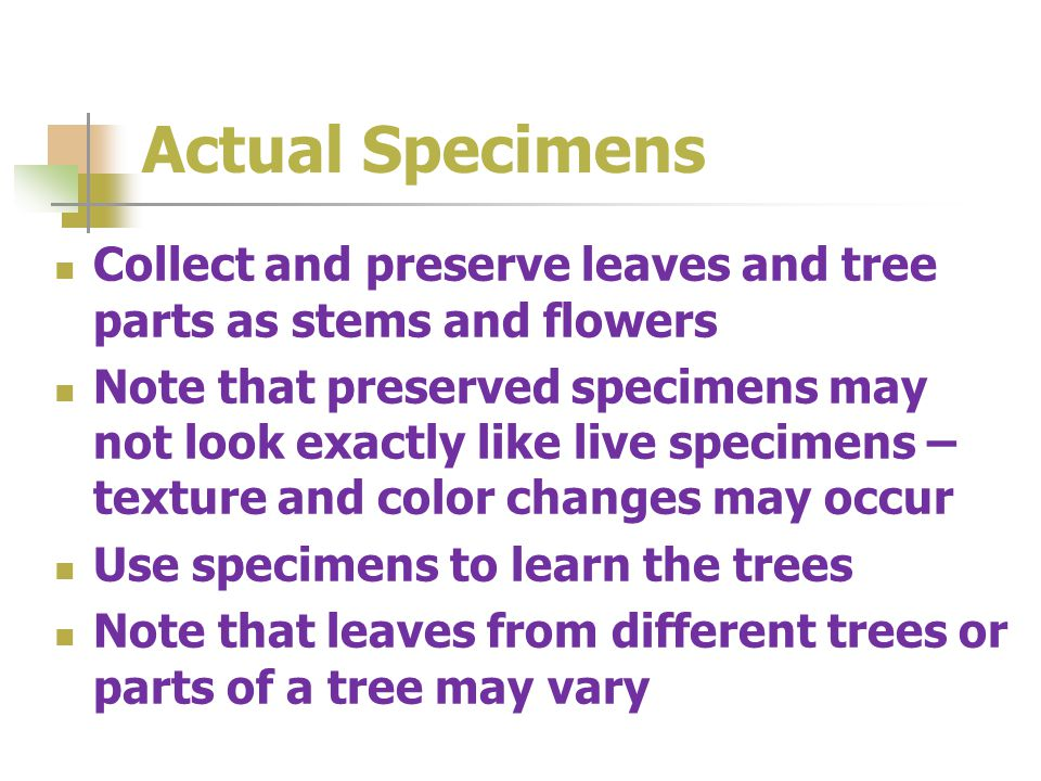 Actual Specimens Collect and preserve leaves and tree parts as stems and flowers Note that preserved specimens may not look exactly like live specimens – texture and color changes may occur Use specimens to learn the trees Note that leaves from different trees or parts of a tree may vary