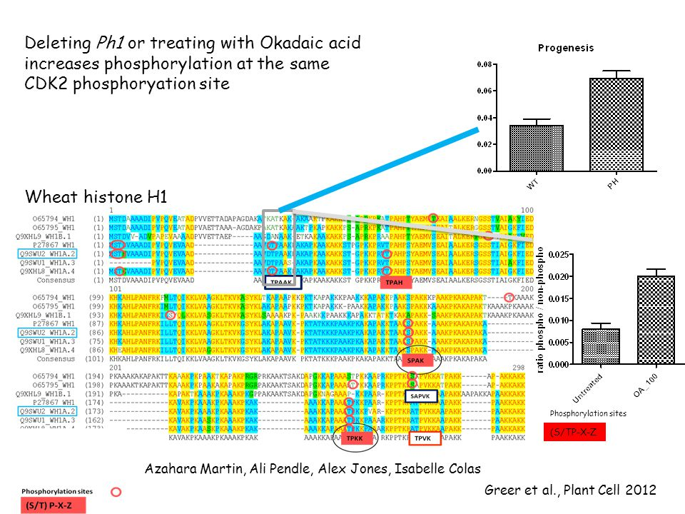 Phosphorylation sites (S/TP-X-Z Azahara Martin, Ali Pendle, Alex Jones, Isabelle Colas Greer et al., Plant Cell 2012 Wheat histone H1 Deleting Ph1 or treating with Okadaic acid increases phosphorylation at the same CDK2 phosphoryation site
