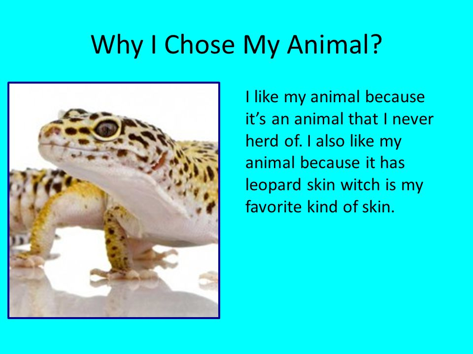 Why I Chose My Animal.I like my animal because it's an animal that I never herd of.