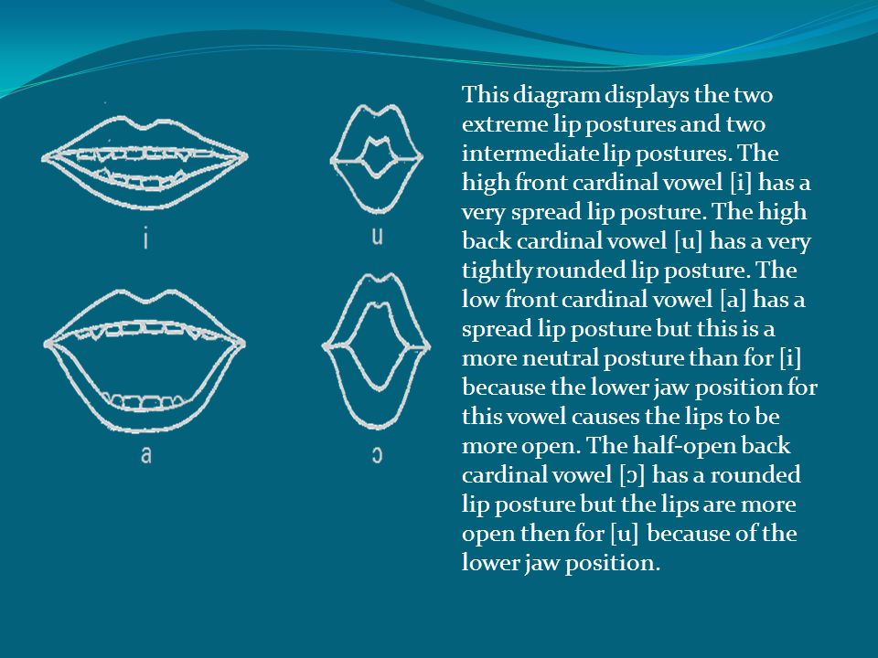 This diagram displays the two extreme lip postures and two intermediate lip postures.
