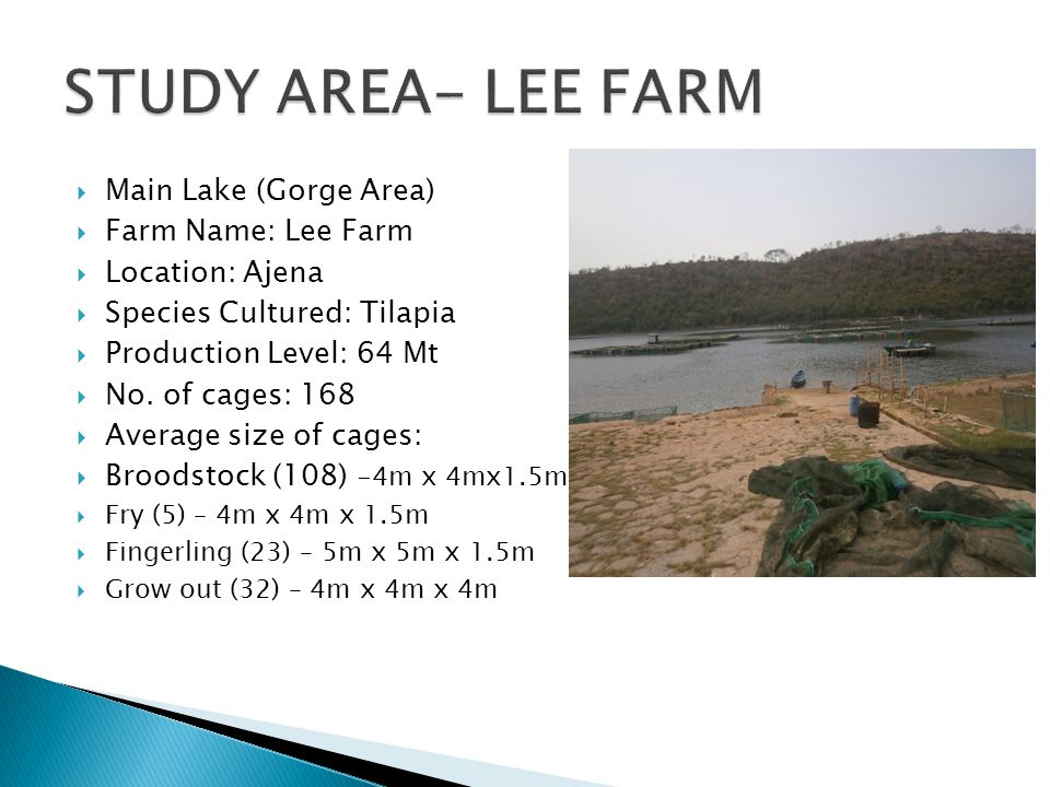  Main Lake (Gorge Area)  Farm Name: Lee Farm  Location: Ajena  Species Cultured: Tilapia  Production Level: 64 Mt  No. of cages: 168  Average s
