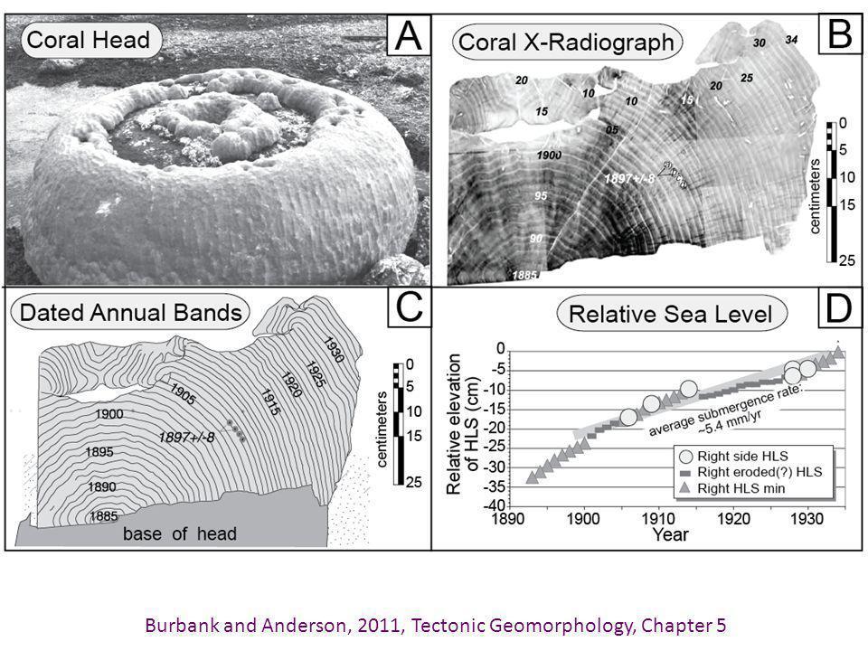http://www.tectonics.caltech.edu/outreach/animations/coral.html --Credit: Danny Natawidjaja, Kerry Sieh, Tectonics Observatory