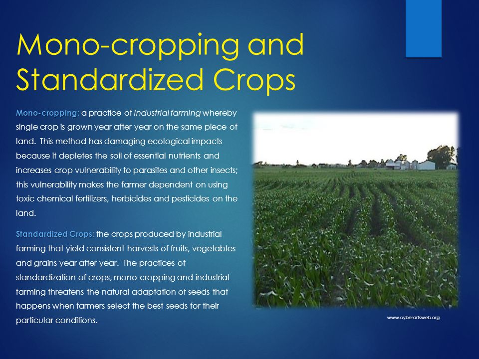 Mono-cropping and Standardized Crops Mono-cropping: Mono-cropping: a practice of industrial farming whereby single crop is grown year after year on the same piece of land.