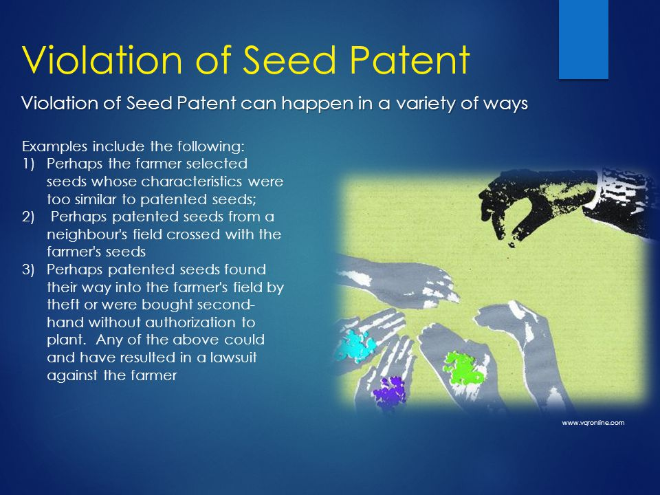 Violation of Seed Patent Examples include the following: 1)Perhaps the farmer selected seeds whose characteristics were too similar to patented seeds; 2) Perhaps patented seeds from a neighbour s field crossed with the farmer s seeds 3)Perhaps patented seeds found their way into the farmer s field by theft or were bought second- hand without authorization to plant.