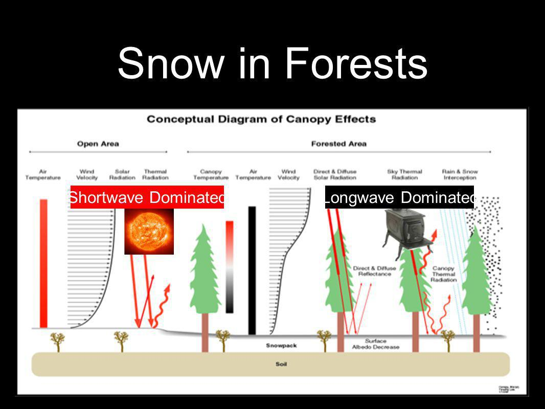 Shortwave DominatedLongwave Dominated Snow in Forests