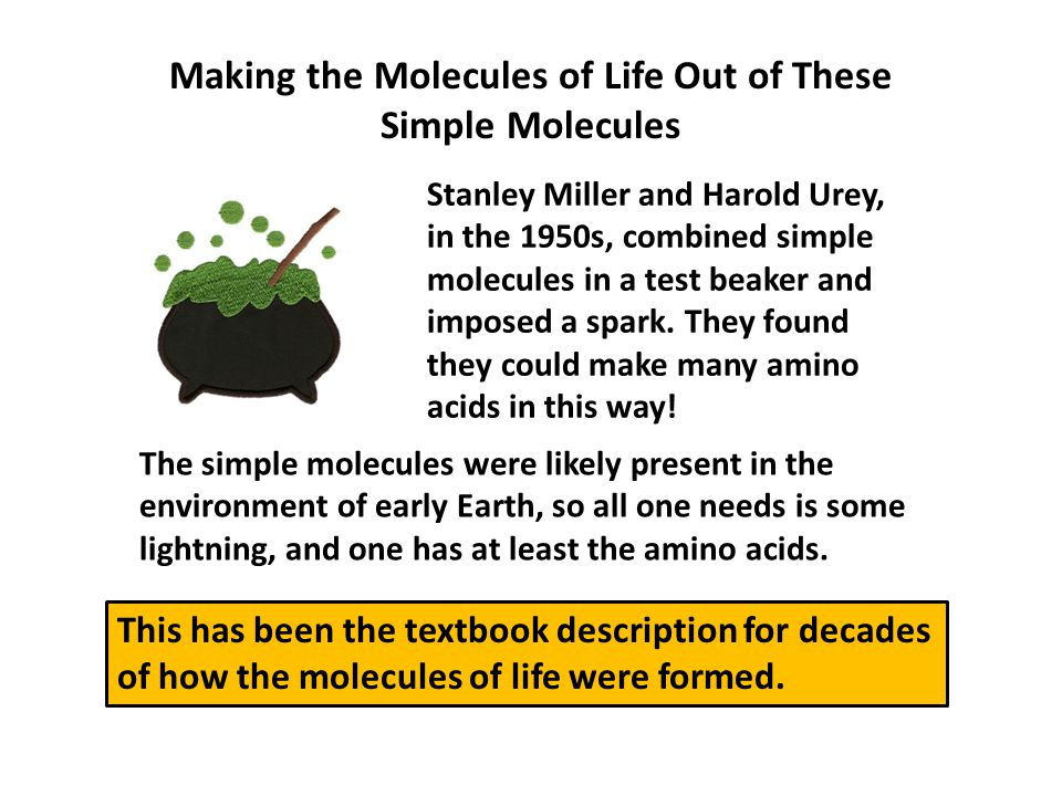 Making the Molecules of Life Out of These Simple Molecules Stanley Miller and Harold Urey, in the 1950s, combined simple molecules in a test beaker and imposed a spark.