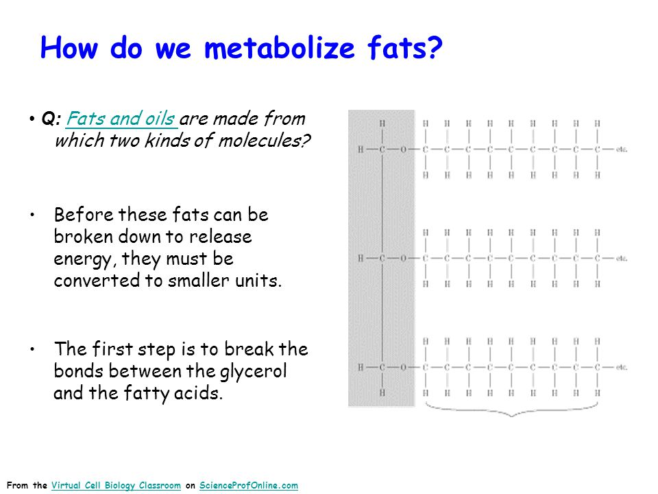 How do we metabolize fats.