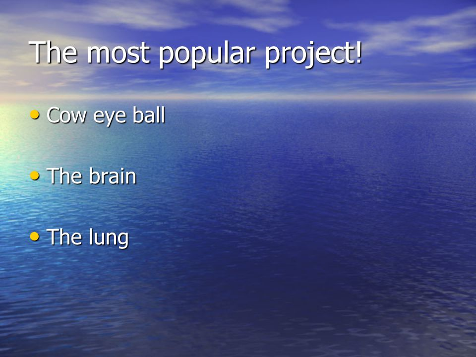 The most popular project! Cow eye ball Cow eye ball The brain The brain The lung The lung