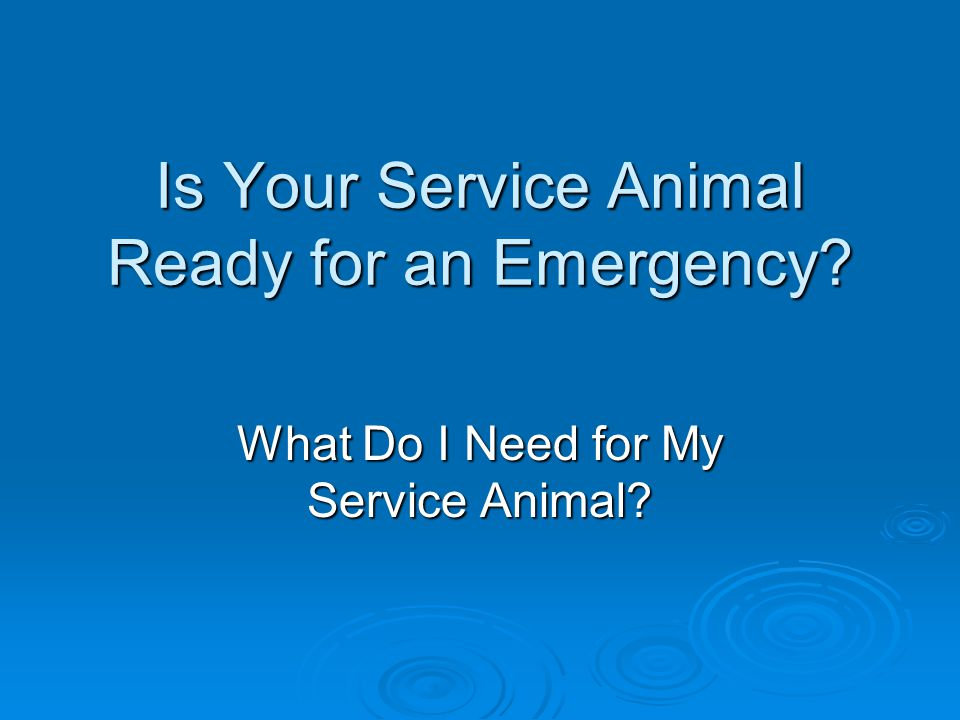 Is Your Service Animal Ready for an Emergency? What Do I Need for My Service Animal?