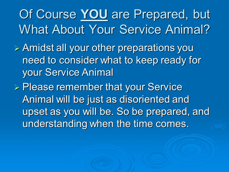 Of Course YOU are Prepared, but What About Your Service Animal?  Amidst all your other preparations you need to consider what to keep ready for your